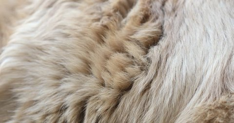 Animal skin abstract fur background