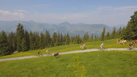 Kitzalps - Biking between the cows - Aerial Kitzbuehel