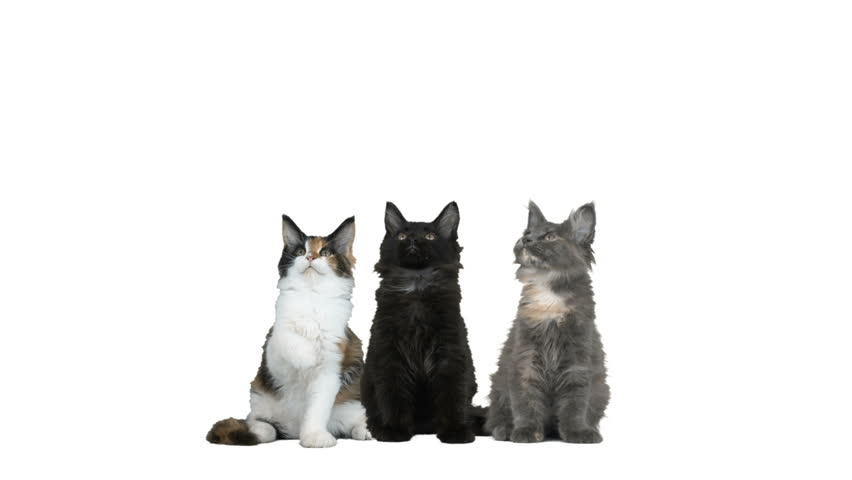 Three kittens on a white background #28380619