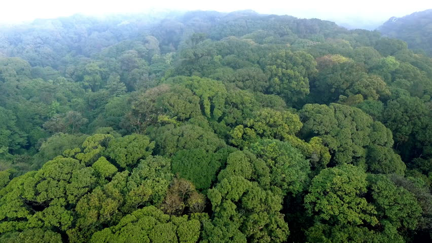 Morning ascending flight over the lush and misty jungle of the Doi Inthanon national park,  near Chiang Mai, the highest mountain peak in Thailand .