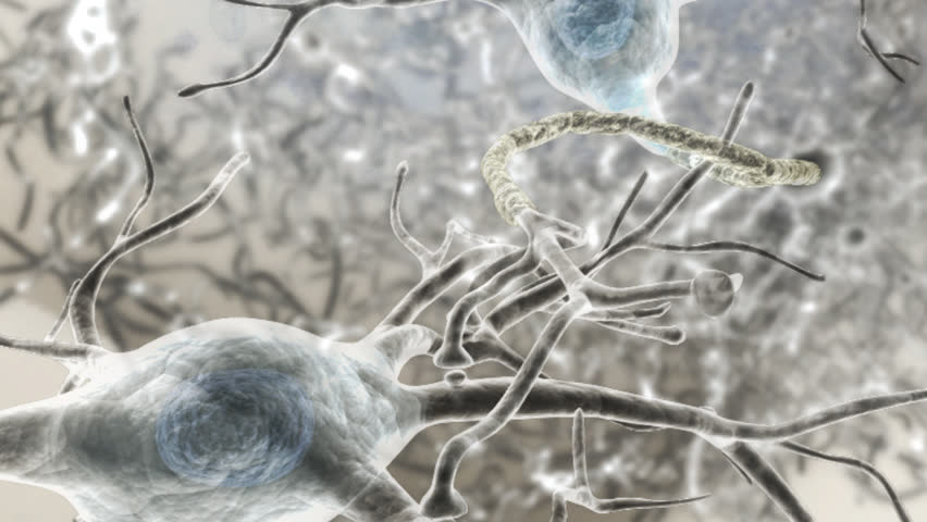 Microscopic view of 3D rendered neurones within the human brain. Anatomical modelling process of post-synaptic potential processing   Shutterstock HD Video #2855962