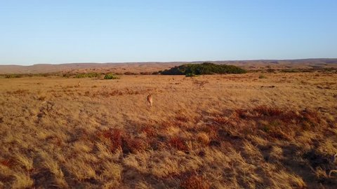 Kangaroo Sunset Australia Landscape from the sky (drone)