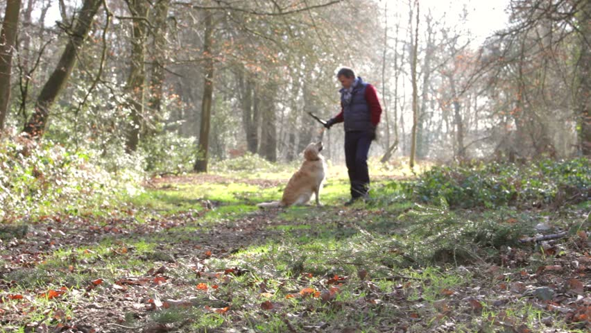 Middle aged man with his dog in the woods playing fetch