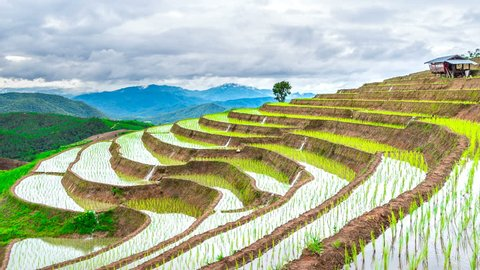 Timelapse of Terrace rice field of Ban pa bong piang in Chiangmai, Thailand.