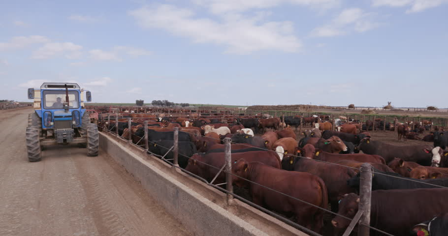 Tractor delivering Food and Drink into a cement trough at a feedlot #28856479