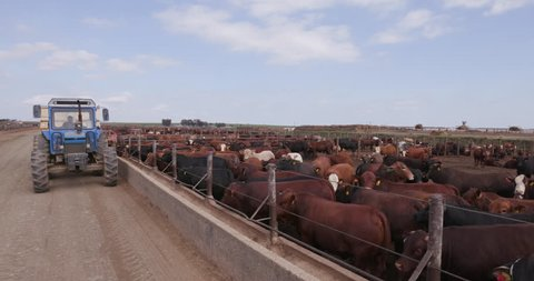 Tractor delivering Food and Drink into a cement trough at a feedlot