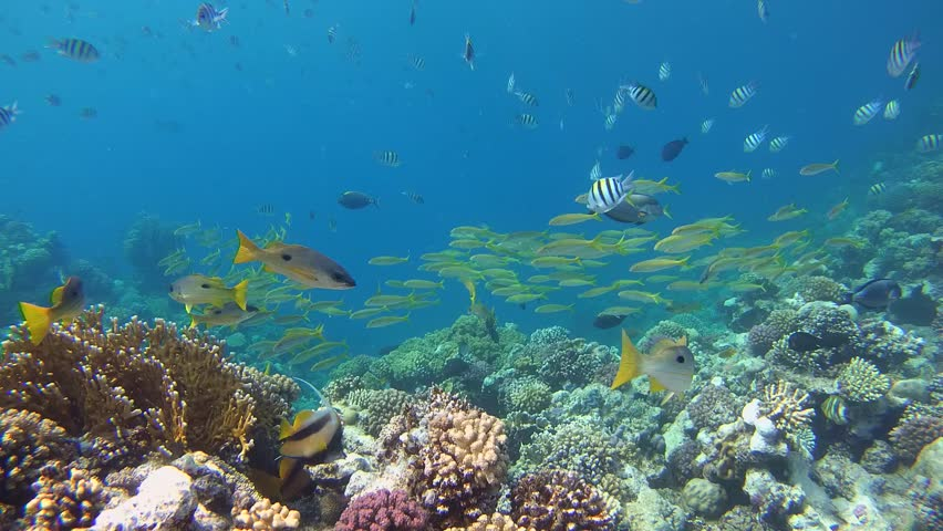 Many bright tropical fish over a coral reef - Abu Dabab, Marsa Alam, Red Sea, Egypt, Africa | Shutterstock HD Video #28868377