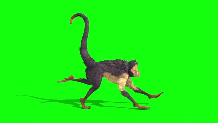 Monkey Runcycle Side Green Screen 3D Rendering Animation