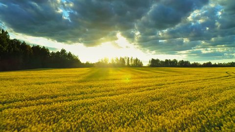 Beautiful idyllic nature, aerial forward motion view over agricultural countryside landscape with blooming canola yellow field, clouds shining sun sunset sky horizon