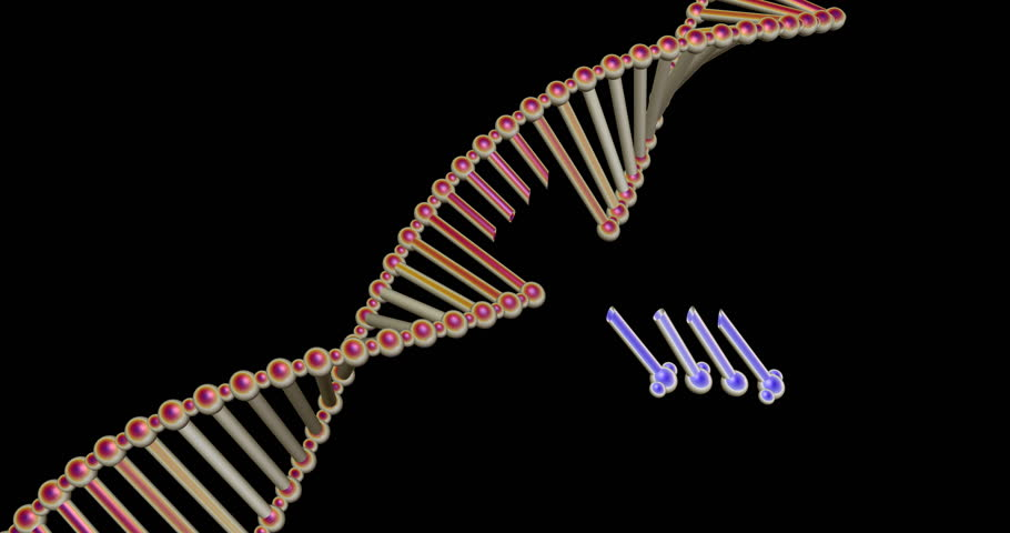 DNA molecule structure repair, editing and manipulation. 3d animation