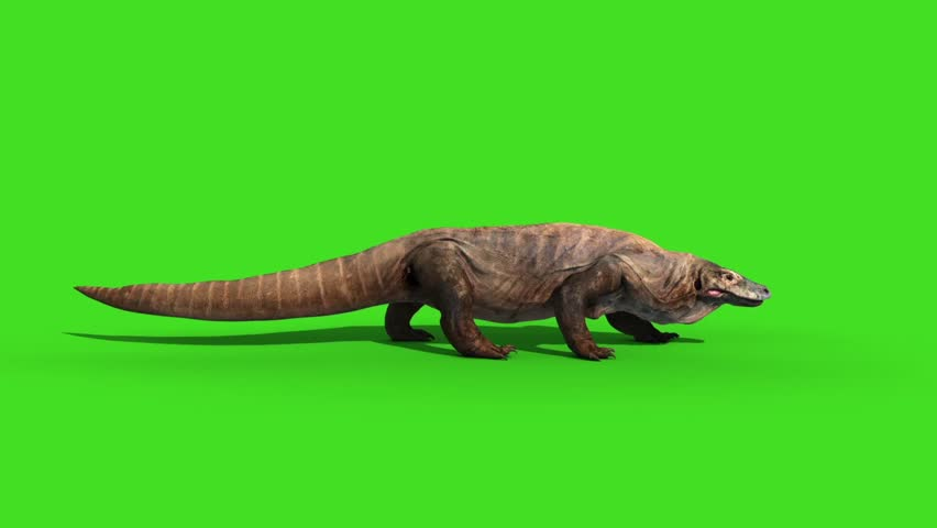 Komodo Dragon Varanus Komodoensis Lizard Walkcycle Side Green Screen Animation 3D