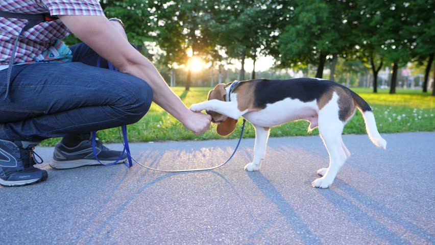 7 Keys to Reading Your Dogs Body Language  Petful