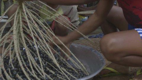 Native people harvesting acai - Amazonas
