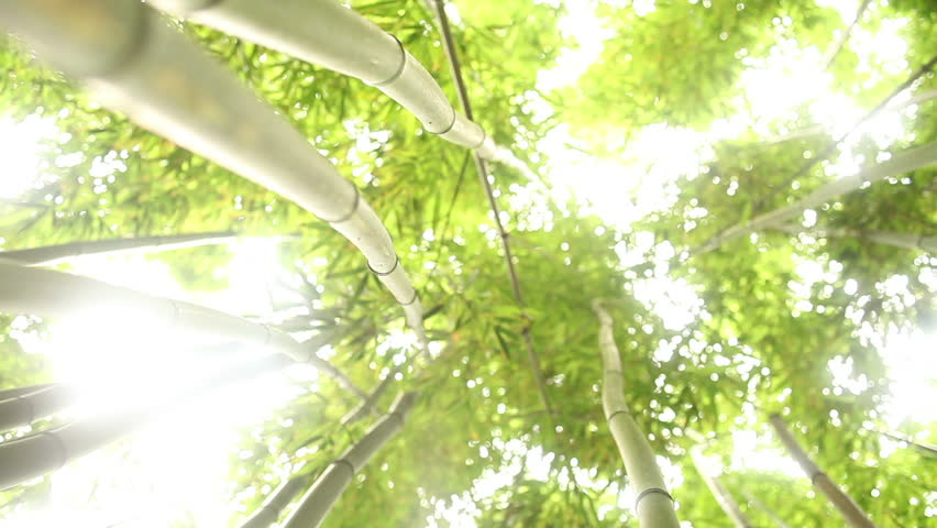 Through Bamboo Forest Dolly
