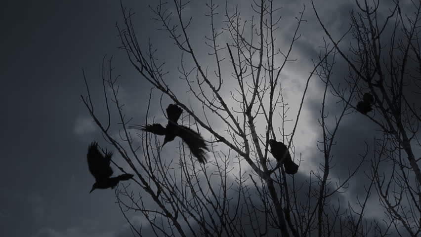 Scary crows in gloomy forest. One raven perching in bare tree branches screaming to raise an alarm and crow birds flying off against dramatic cloudy sky. | Shutterstock HD Video #29770579
