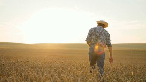 Stylish old caucasian farmer walking in the golden wheat field on his farm during the morning sunrise.
