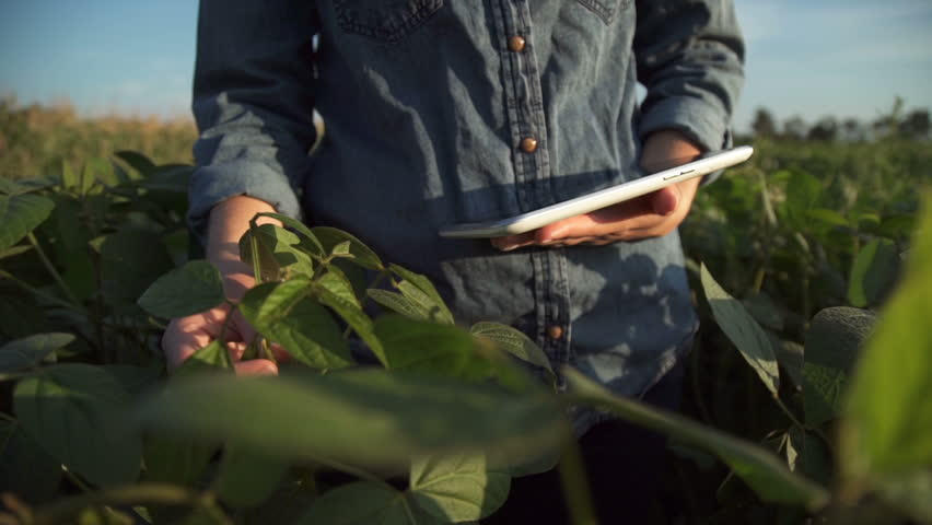 Farmer uses a tablet computer on a soy field