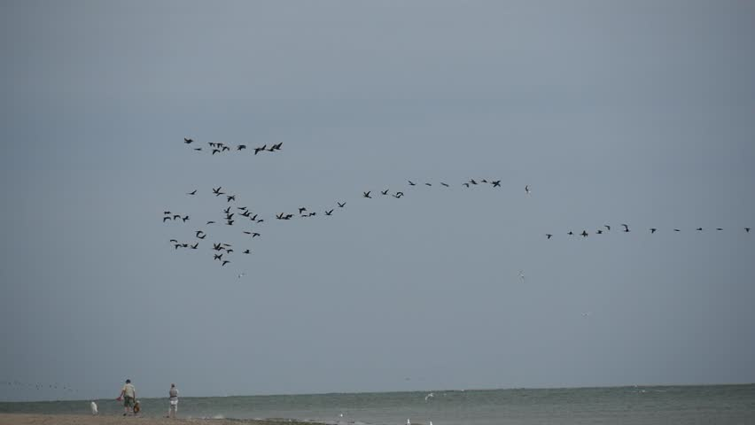A flock of migratory birds in the sky over the Wadden sea, Frisian islands, Holland. | Shutterstock HD Video #30020839
