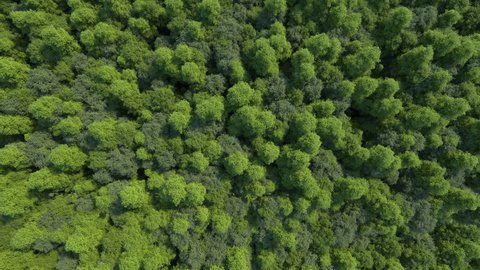 3d rendering ultra high quality video. Texture of forest in an aerial view. Beautiful panoramic image over the tops of pine forest. The video is made as if using a helicopter. Loop animation.