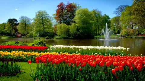 Keukenhof flower garden with blooming tulip flowerbeds and fountain. One of the world's largest flower gardens. Lisse, the Netherlands.