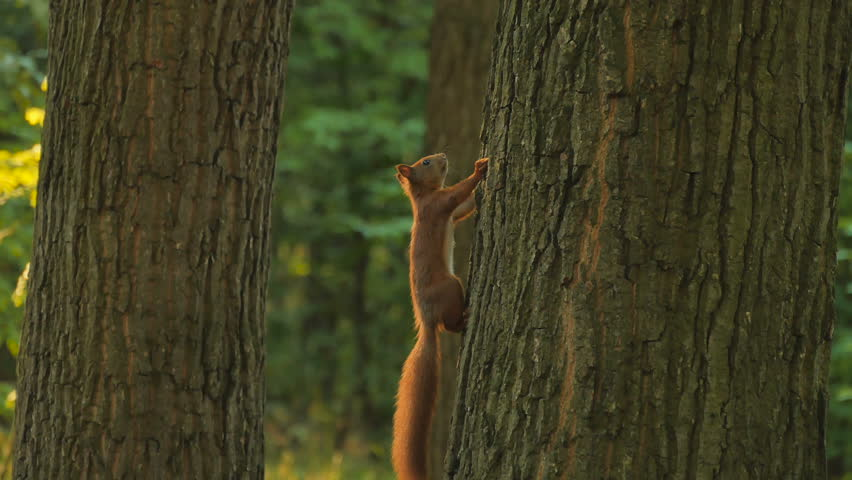 Small squirrel on tree