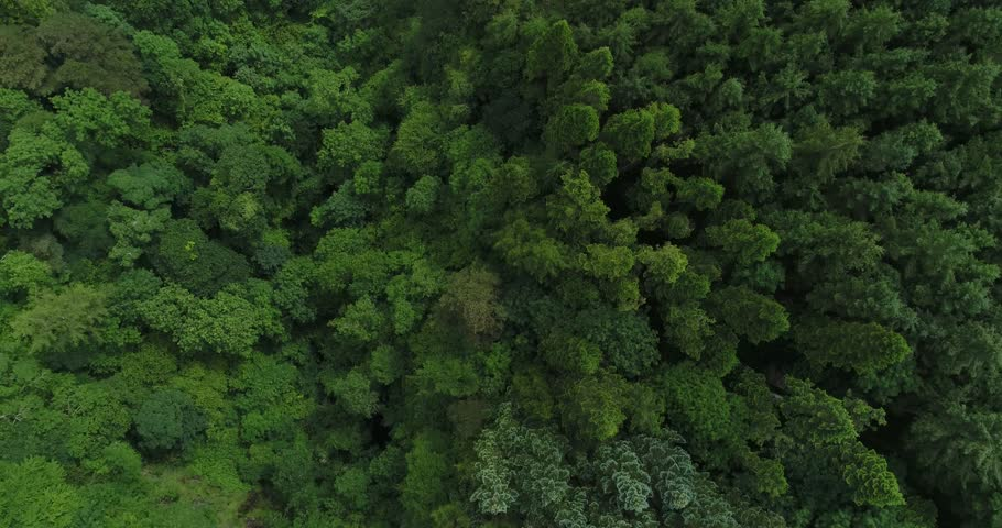 Looking down on amazing green forest jungle of Ireland, Britian, Scotland and Europe.  Spring and Summer,