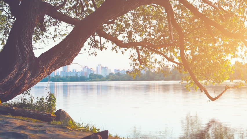 Beautiful nature scene: a lonely tree in sunset soft light glow. The water is flowing, sun goes down. Cityscape on a background. Dnipro River, Kiev, Ukraine. Time lapse. Slow motion. 4k
