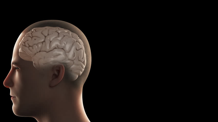 3D rendition of the human hippocampus within the mid-brain and limbic system, responsible for olfaction and memory, viewed through CGI of an anatomical male cranial vault (head) on a black background