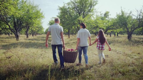Back view a man and a woman are carrying a full basket of apples, a young daughter is holding her mother's hand. Harvesting apples in the apple orchard