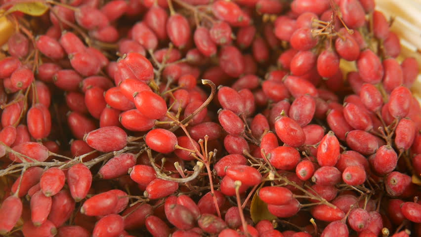 Header of barberry