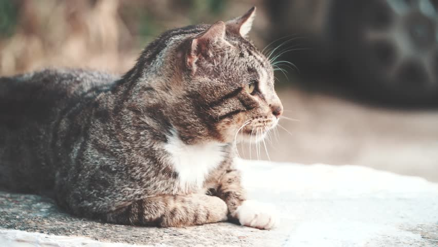 Greek cat on the street