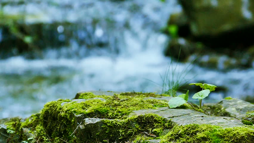Mountain  small river  with old stones and green moss. Slow motion