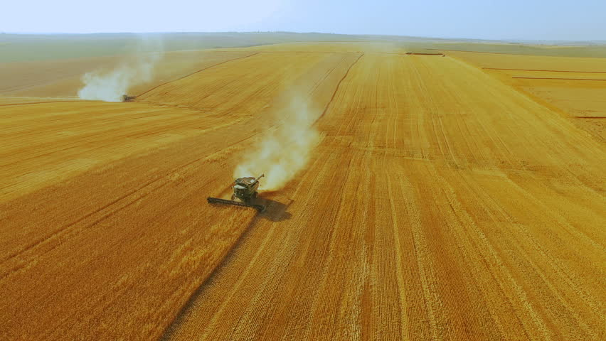 Aerial view of combine harvester gathers the wheat crop in 4K