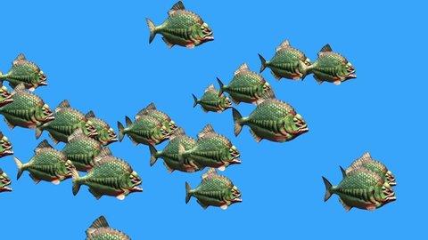 Group Fish Piranha Swim Blue Screen 3D Rendering Animation