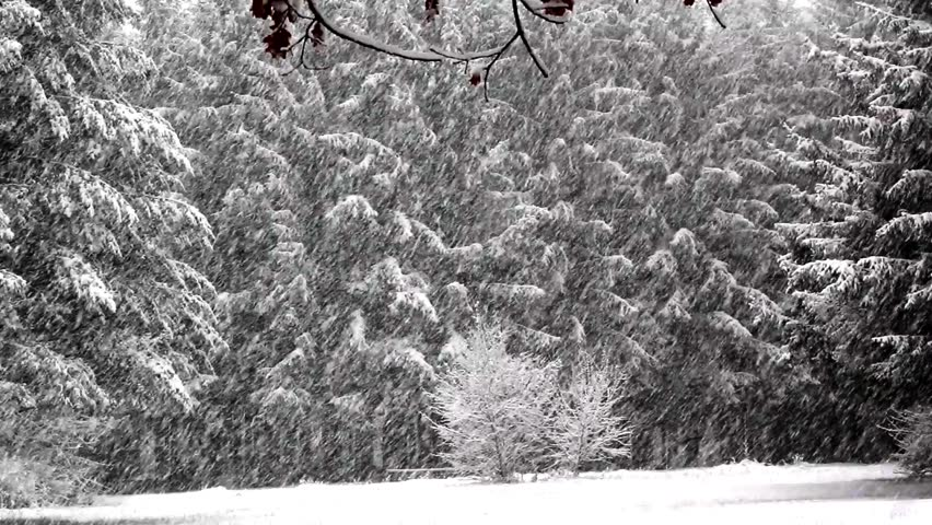snowfall in the park,snowfall,	fall of snow,snow,winter,trees,