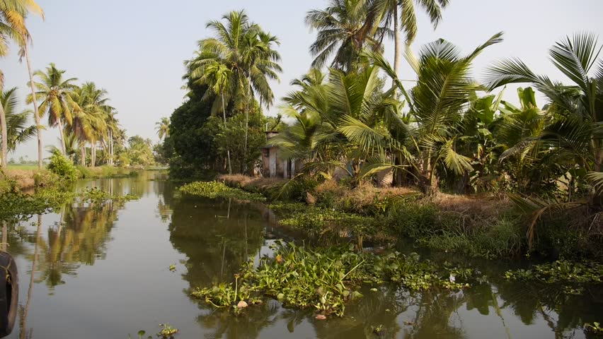 View from a moving houseboat on a canal in the backwaters of Alleppey in the State of Kerala, Southern India