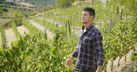 A boy in the vineyard breathes and with his arms opened in a sign of freedom and is happy with the good harvest of his vineyards and the quality of his wine.