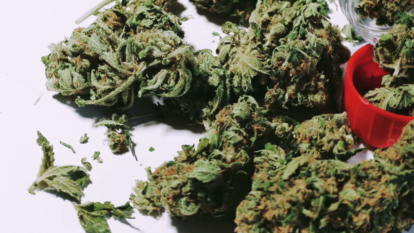 dealing with the problem of cries of conservatives regarding weed or marijuana Marijuana is the most popular illicit drug in the united states, as more than 80 percent of drug abusers used marijuana in 2013, and 198 million americans aged 12 and older used marijuana in the month before the 2013 national survey[21.