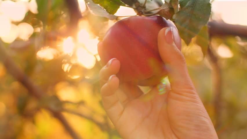 Header of Apple
