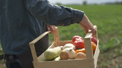 The farmer is holding a box of organic vegetables