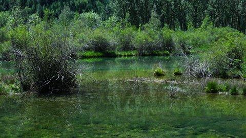 Cinca river, Pineta valley, Ordesa y Monte Perdido National Park, Sobrarbe, Huesca, Aragon, Spain, Europe