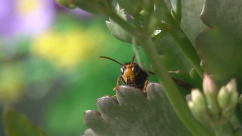 Wasp hornet observe and takeoff