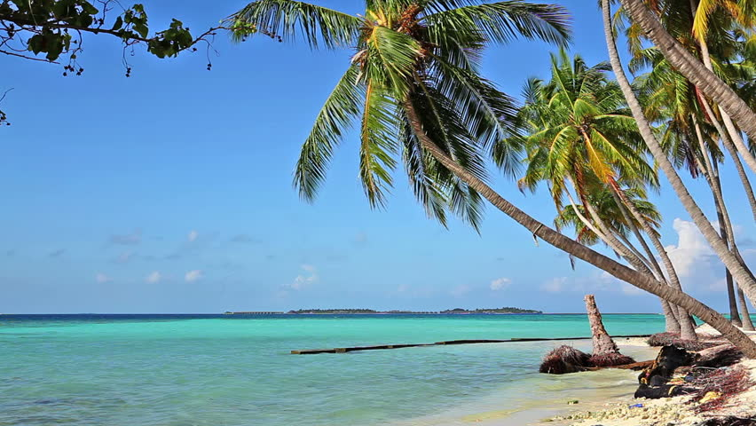 Tropical beach with coconut palms trees | Shutterstock HD Video #3145459