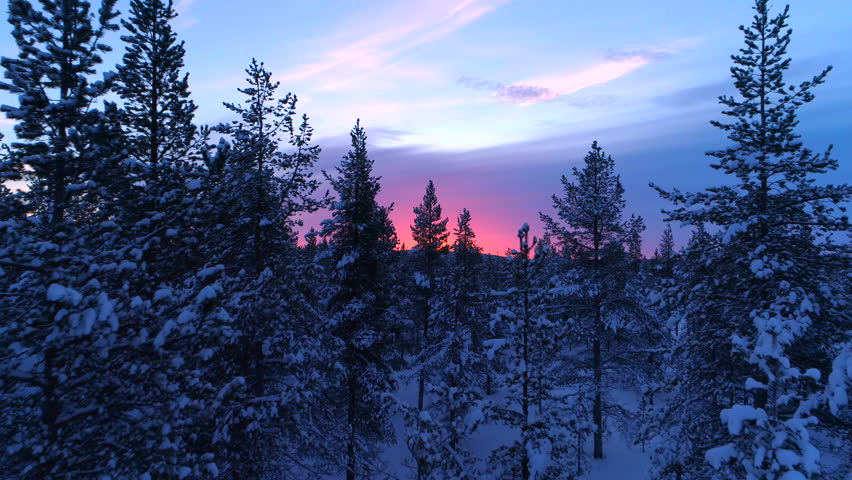 AERIAL CLOSE UP Flying trough snowy spruce forest treetops at gorgeous winter sunset. Stunning reddish sunrise behind the endless winter forest covered in fresh snow. Winter pine forest under pink sky