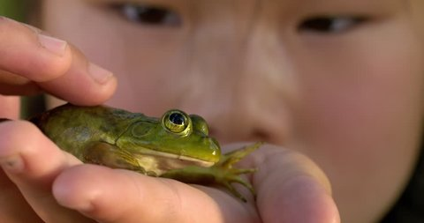 Young girl looks at a frog that she holds in her hands. Hand-held slow motion 4K recorded at 60fps with macro lens, focus on frog.