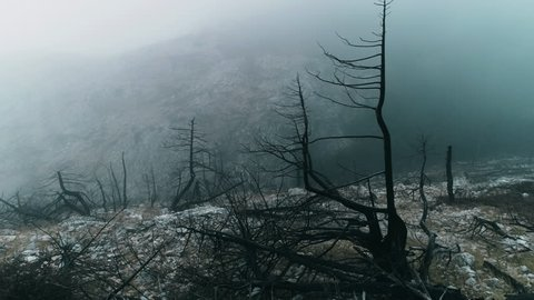 4K25p slow dolly shot of a barren land,burned out forest in mist and fog.View of a ravaged and burned out forest landscape at winter.