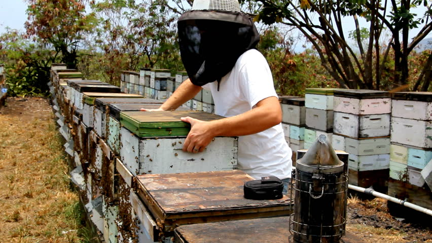 Beekeeper Working In Bee Yard With A Box