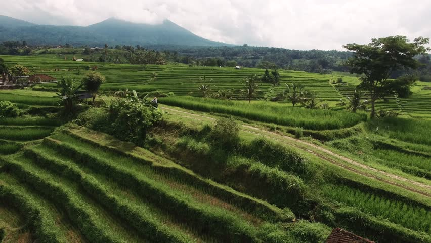 Aerial video in an amazing landscape, with drone, above rice terraces with a girl riding her bike on a beautiful day.    Shutterstock HD Video #31855933