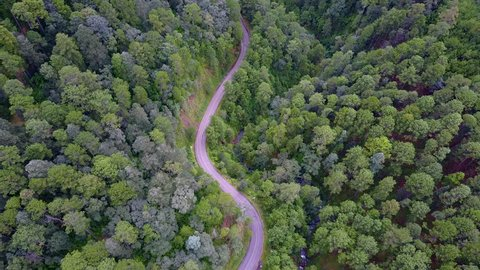 road on a forest aerial