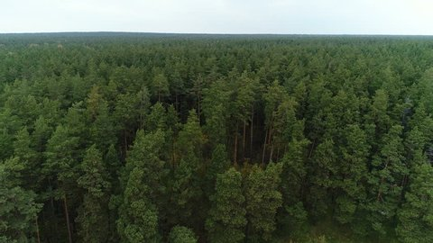 Aero footage in motion by quadcopter of wonderful land scape autumn trees from the height. Traveling concept of clean pure scenery scene, air camera shot treeline and treetop far from the city, Taiga